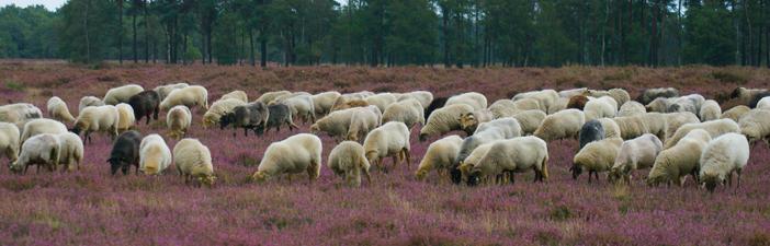 Het Drentse Landschap: mooi dichtbij!